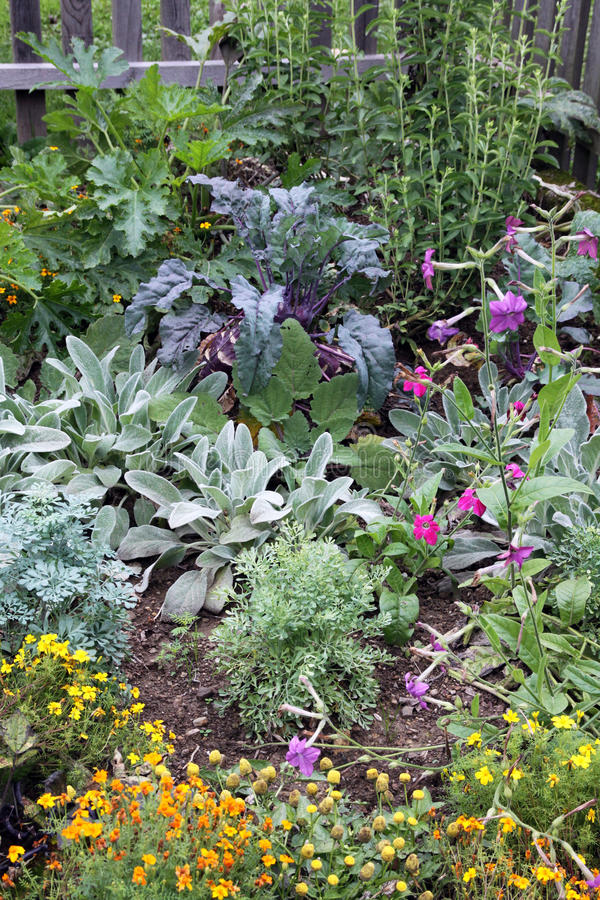 Mixture vegetable and flowers garden bed stock image