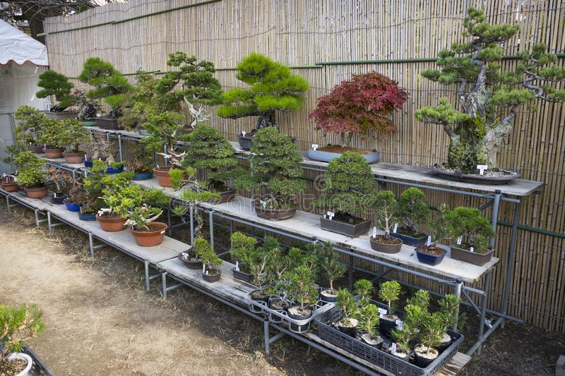 386 Bonsai Sale Photos Free Royalty Free Stock Photos From Dreamstime