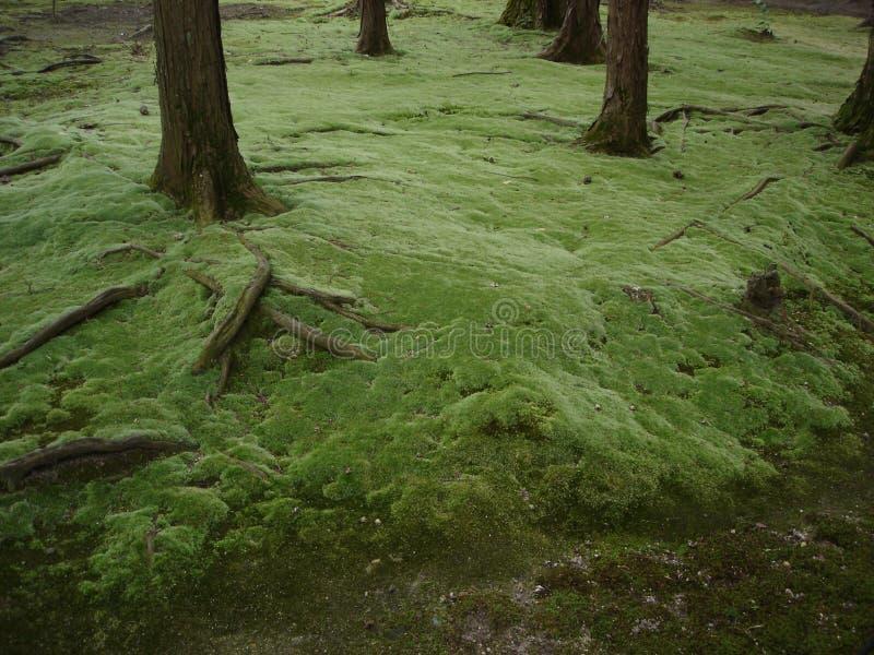 Miyazaki S Forest 2 Royalty Free Stock Photography