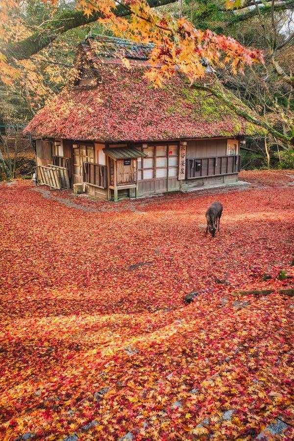 Mizuyachaya do parque público de Nara no outono imagem de stock royalty free