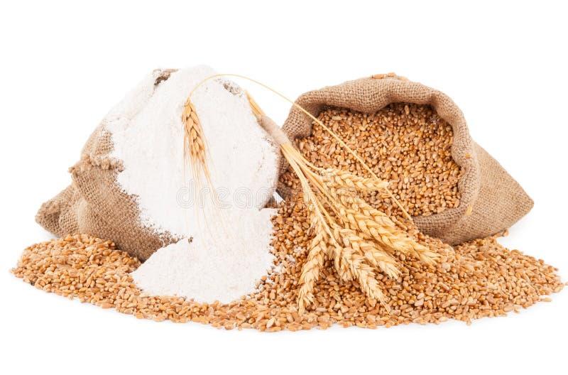 Mjöl- och vetekorn royaltyfri foto