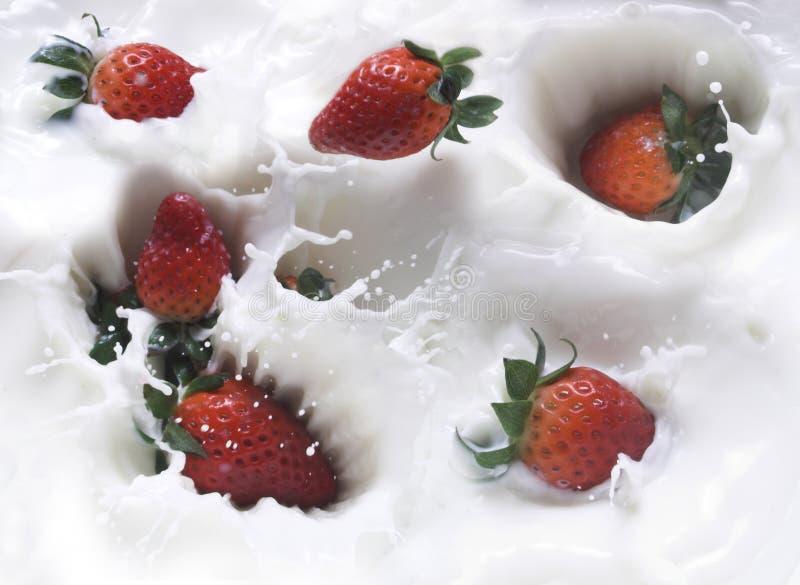 mjölka jordgubben fotografering för bildbyråer
