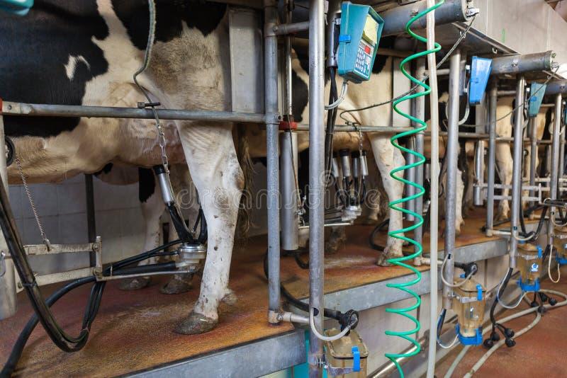 Mjölka process arkivbilder