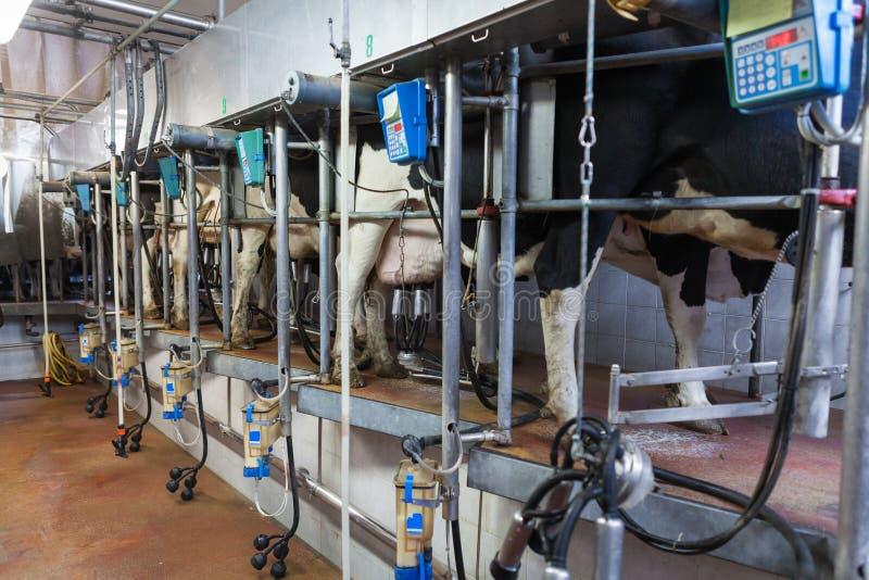Mjölka process royaltyfria bilder