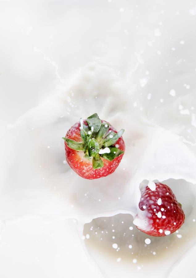 mjölka strawberrys arkivfoton