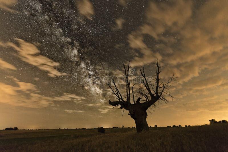 Mjölkaktig väg över dött träd arkivfoto