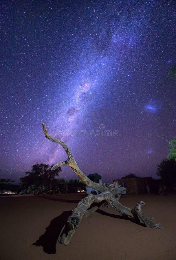 Mjölkaktig väg över en död trädstam i den Namib öknen av Namibia arkivbild