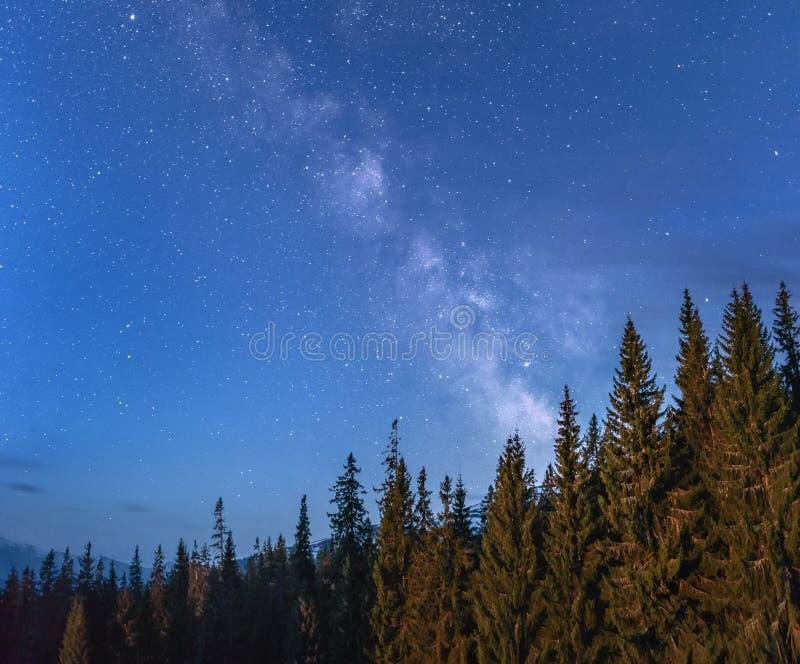 Mjölkaktig väg över och stjärnor över en skog med bergskedja på th royaltyfria bilder