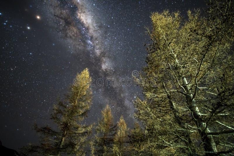 Mjölkaktig väg över träd på den Aoraki monteringskocken National Park, arkivfoto