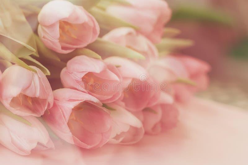 Mjuk mjuk bakgrund av rosa tulpan med dagg Vårblommor, abstrakt romantisk pastellfärgad blom- bakgrund royaltyfri foto