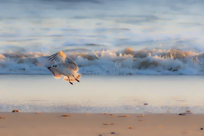 Mjuk drömlik naturbild av en seagull i vinterfjäderdräkt arkivfoton