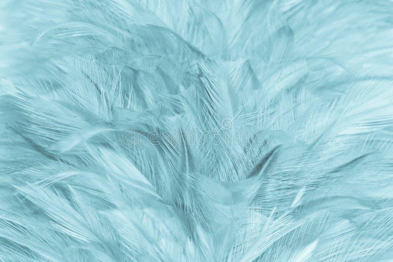 Mjuk fjäder för Closeup royaltyfria foton