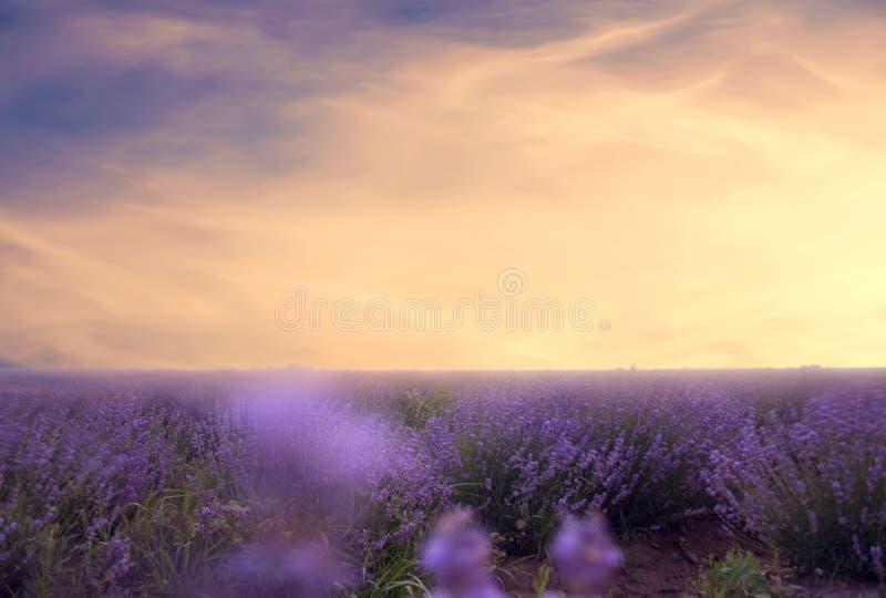 Mjuk fokus av lavendelfältet på den färgrika solnedgången i en varm su arkivbilder