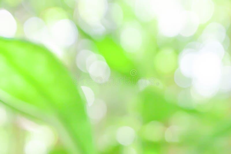Mjuk fokus av unga gröna sidor i en tropisk ljus och härlig bokeh för skog, med suddiga gröna bakgrunder royaltyfria foton