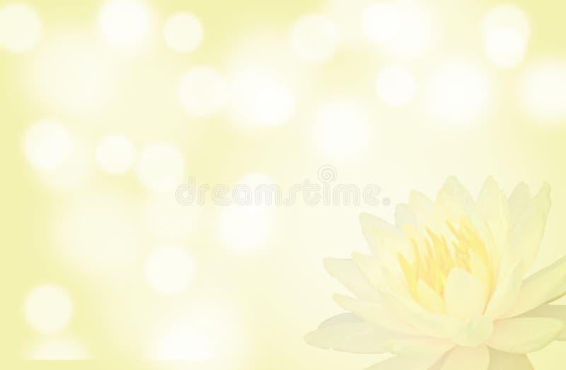 Mjuk fokuslotusblomma eller näckrosblomma på gul färgabstrakt begreppbakgrund arkivbild