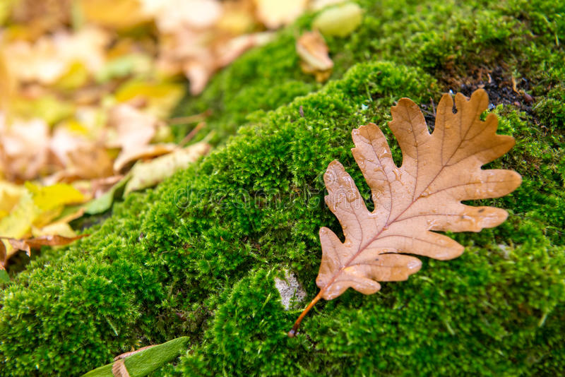 Download Mjuk Grön Vegetation I Skogmossakolonierna Fotografering för Bildbyråer - Bild av gammalt, naturligt: 78730651