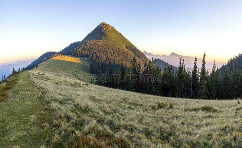 Mjuk krämig solnedgång i Carpathian berg Gräs den dolda ängen, sörja träd och avlägsna bergmaxima royaltyfria bilder