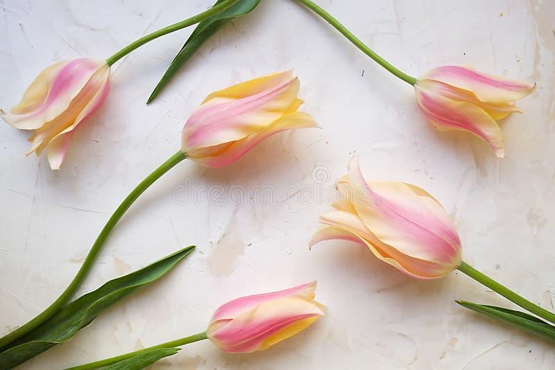 Mjuk minimalistic vårblommasammansättning på texturyttersida Härlig kvinnlig växtgarnering för feriehälsningkort arkivfoton