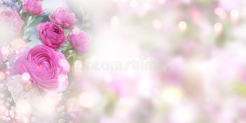 Mjuk rosa rosbakgrund royaltyfri bild