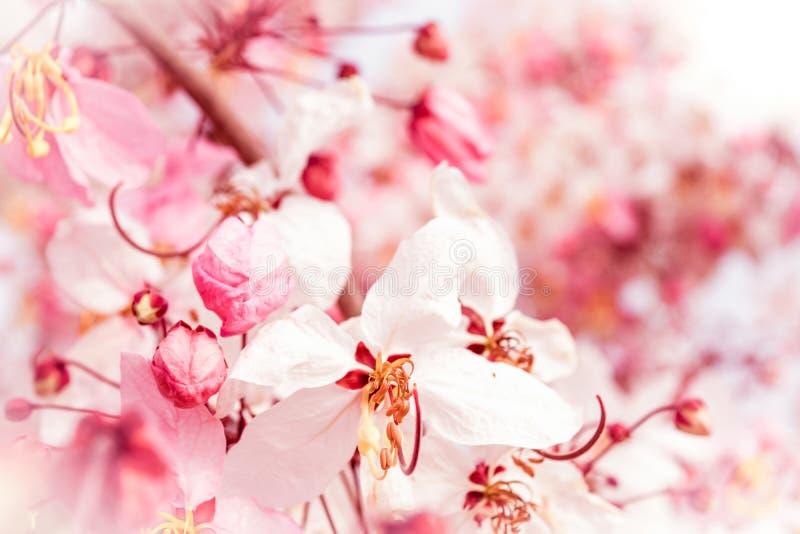 Mjuk suddighet av rosa blommor arkivbilder