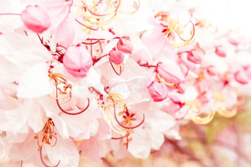 Mjuk suddighet av rosa blommor arkivfoto