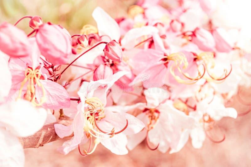 Mjuk suddighet av rosa blommor arkivfoton