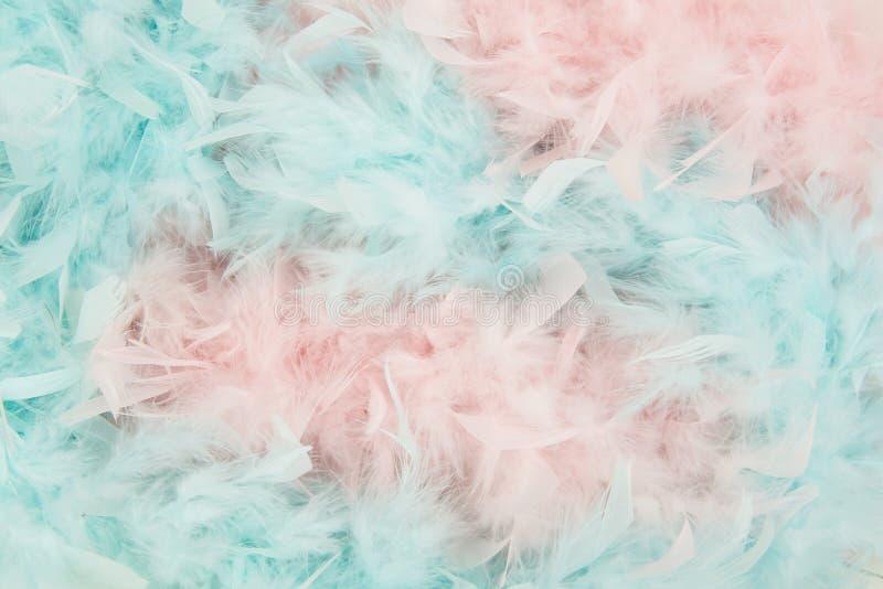 Mjuka blått- och rosa färgfjädrar från en boa royaltyfri foto