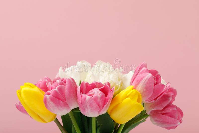 Mjuka blomma färgrika tulpan som isoleras på rosa bakgrund royaltyfri bild