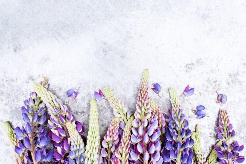 Mjuka färgrika lupines på grå färgerna texturerade tabellen fotografering för bildbyråer