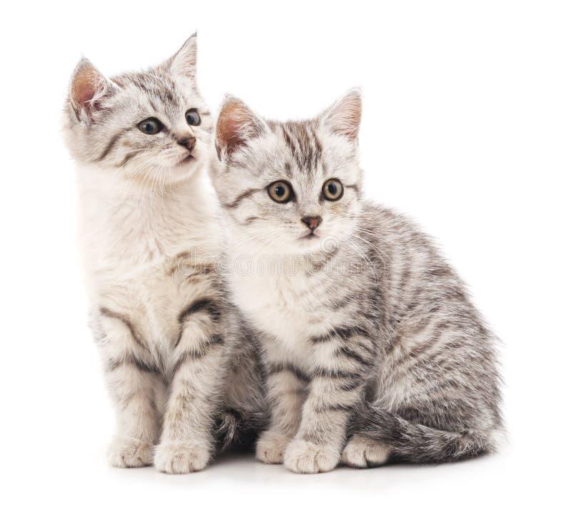 Mjuka kattungar royaltyfri bild