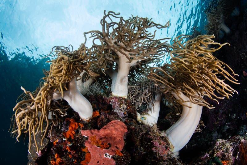 Mjuka koraller på kanten av den härliga reven royaltyfri bild