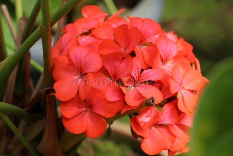 Mjuka och delikata blommor arkivbilder