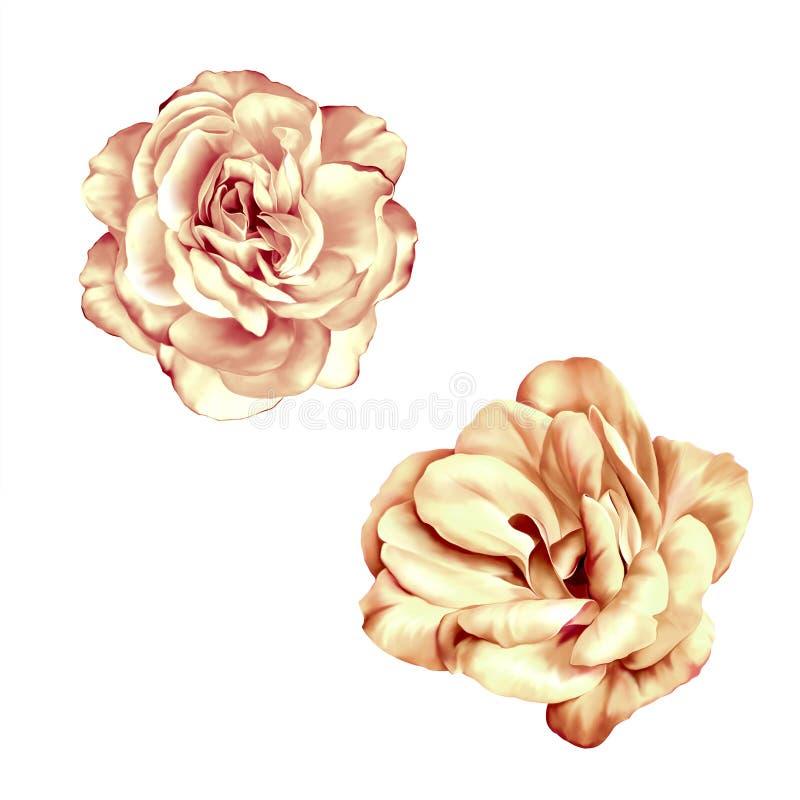 Mjuka pastellfärgade rosa färger Rose Flower isolerade stock illustrationer