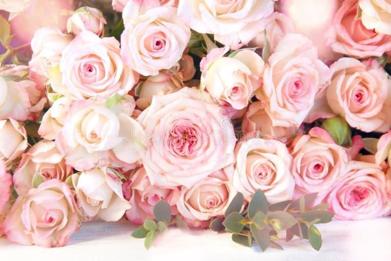 Mjuka rosa rosor för ett bröllop royaltyfria foton