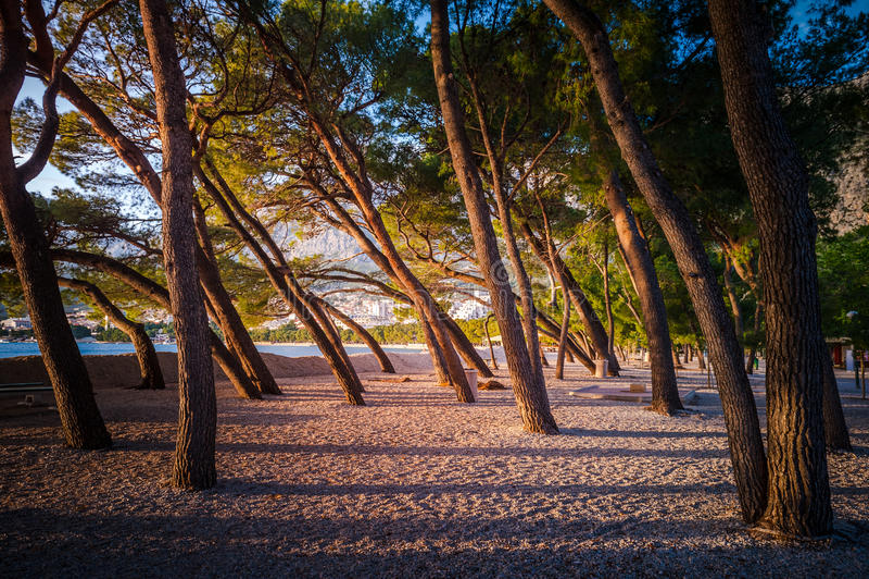 Mjukt eftermiddagsolljus på en tom strand i Makarska, Kroatien arkivbilder