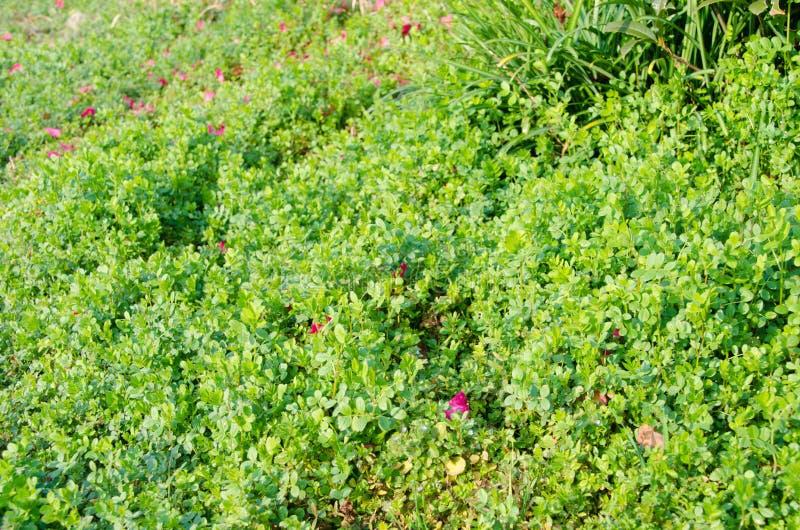 Mjukt gräs av den tidiga våren arkivbilder