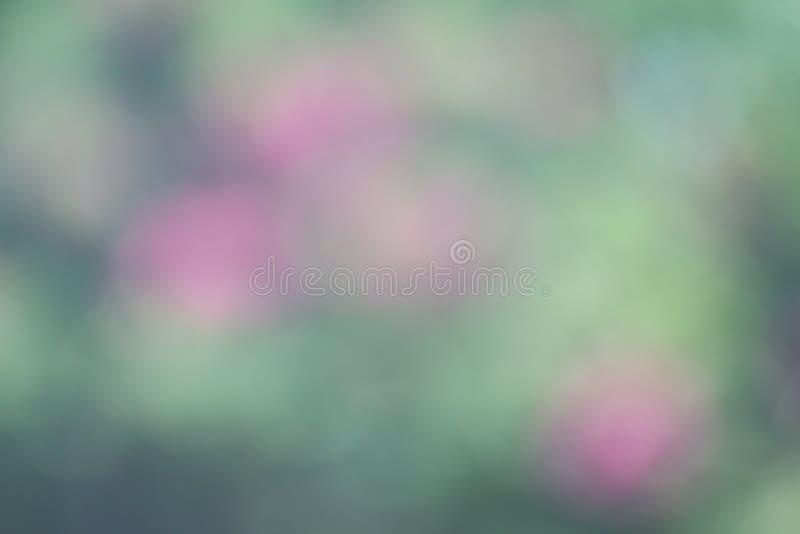 Mjukt ljus för bakgrundsblommabokeh - grön rosa oskarp pastellfärgad färg, blomning för abstrakt konst för grön rosa lutning graf arkivbilder