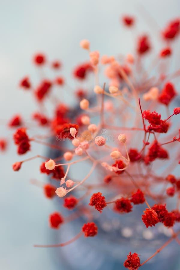 Mjukt rött och rosa färgen blommar, den bästa sikten, slut upp, romantiker, tabellinställningen, garnering, bröllop, dagen för mo royaltyfri bild