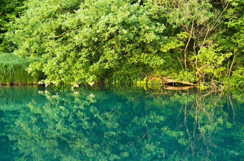 Mlava河的美好的绿色 免版税库存照片