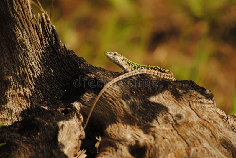 Mm00-1404 Anm Lizard D3000 55-200 Fav Free Public Domain Cc0 Image