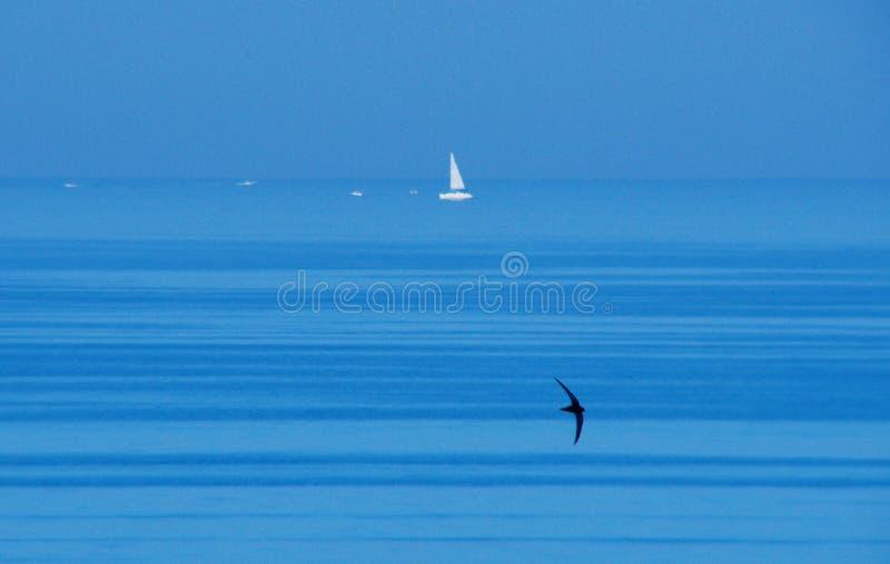 MM00A-1206 SEA ANM BIRD SAILING BOAT TEL FZ7 royalty free stock photo