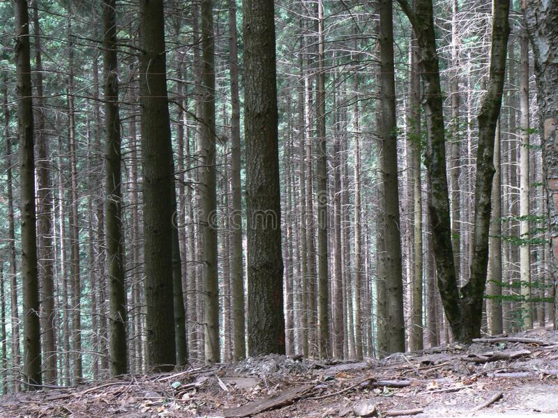 Mm00-0907 Giro 02 21 Ii Pln Ntr Fz7 Free Public Domain Cc0 Image
