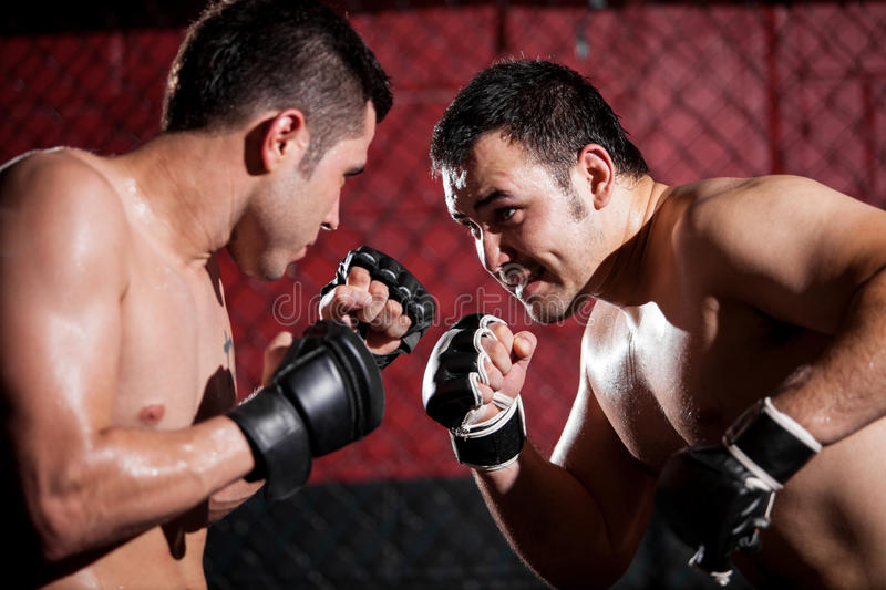 Download MMA Fighters During A Match Royalty Free Stock Photo - Image: 33845775