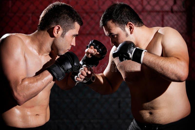 MMA-Vechters tijdens een strijd stock fotografie