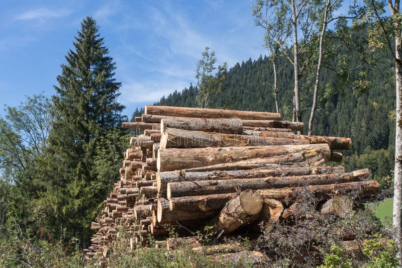 Mnóstwo łupka obok lasu zdjęcia royalty free