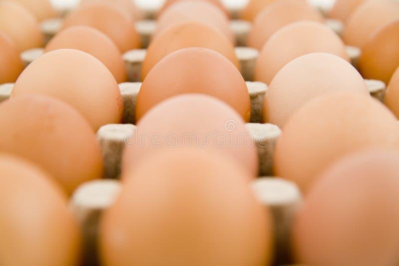 mnóstwo jajko zdjęcia stock