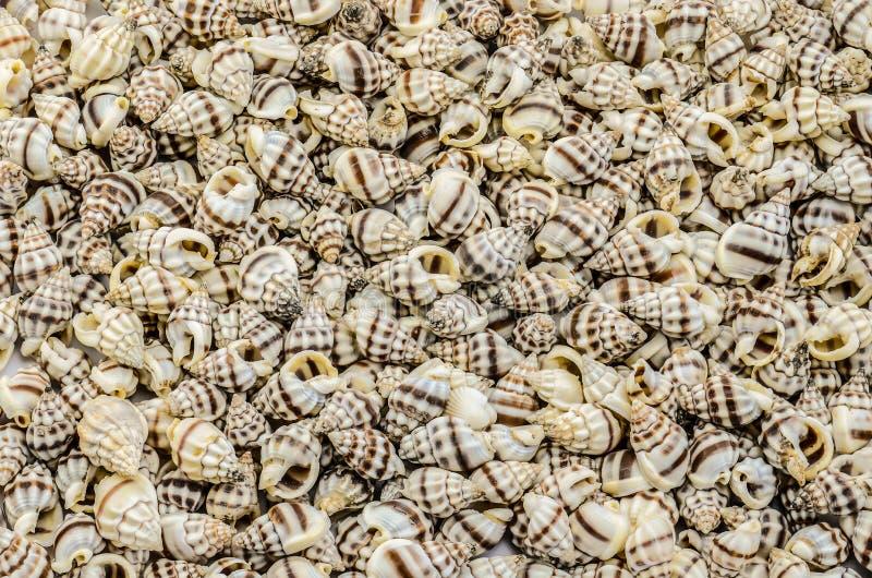 Mnóstwo mussels obraz stock