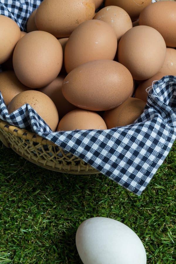 Mniejszościowy pojęcie: jeden biały jajko odizolowywa od grupy bro fotografia royalty free