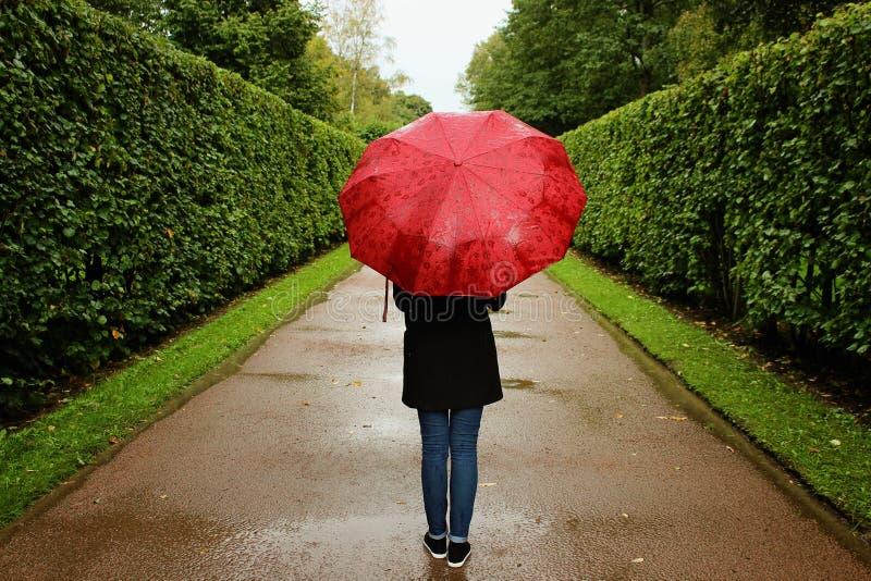 A moça anda ao longo das aleias verdes dos arbustos na chuva com um guarda-chuva vermelho fotografia de stock royalty free