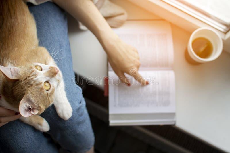 A moça coberta com uma cobertura senta-se na janela com seu gato, lê um livro e chá das bebidas, ensina o gato ler, cópia foto de stock